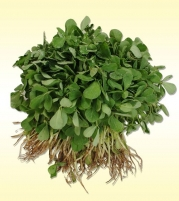 Fenugreek Leaves Big(MOTI METHI)