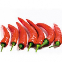 Pikador Chilli { Red }